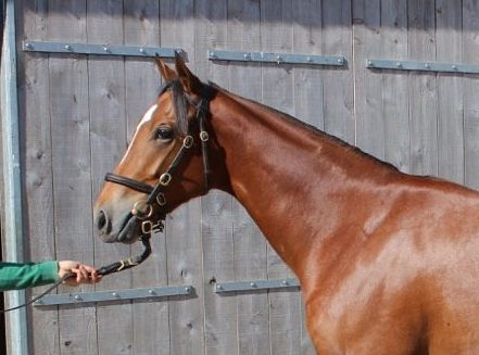 Exciting horses for sale